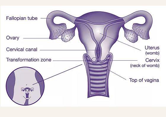 HPV teszt - papillor.proyectorahab.com